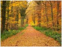 Entre Ville et Nature