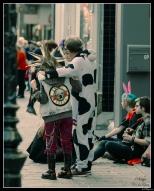 Gun's and Cows