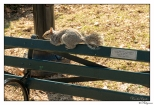 """New York Central Park Bench Quote """"A Life That Touches..."""""""