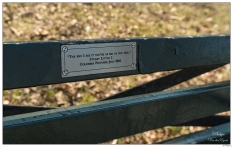 """New York Central Park Bench Quote """"As Big As You Feel"""""""