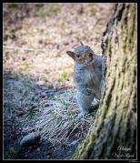 Katherine Pancol's Squirrel